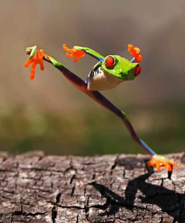 frog06