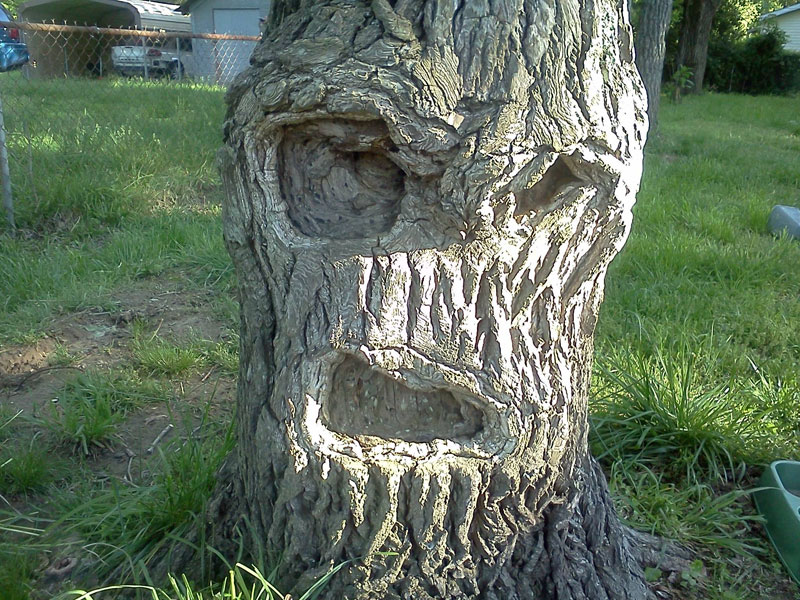 grumpy-tree-get-off-my-lawn