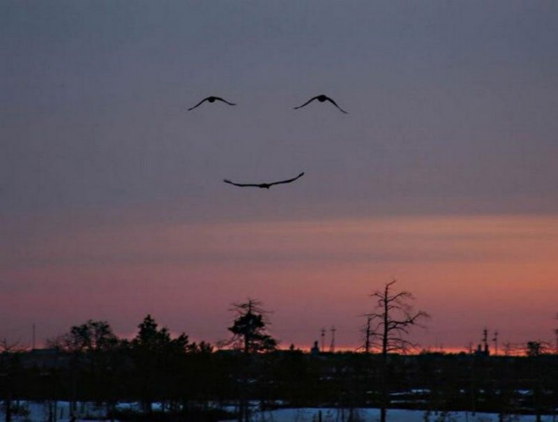 three-birds-make-smiling-face