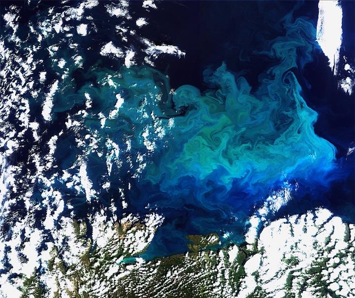 Plentiful plankton