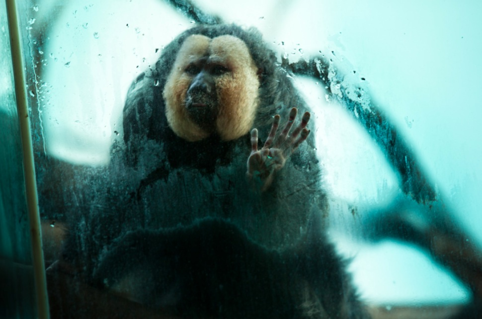 Touching Portraits Of Animals In Captivity By Gaston Lacombe