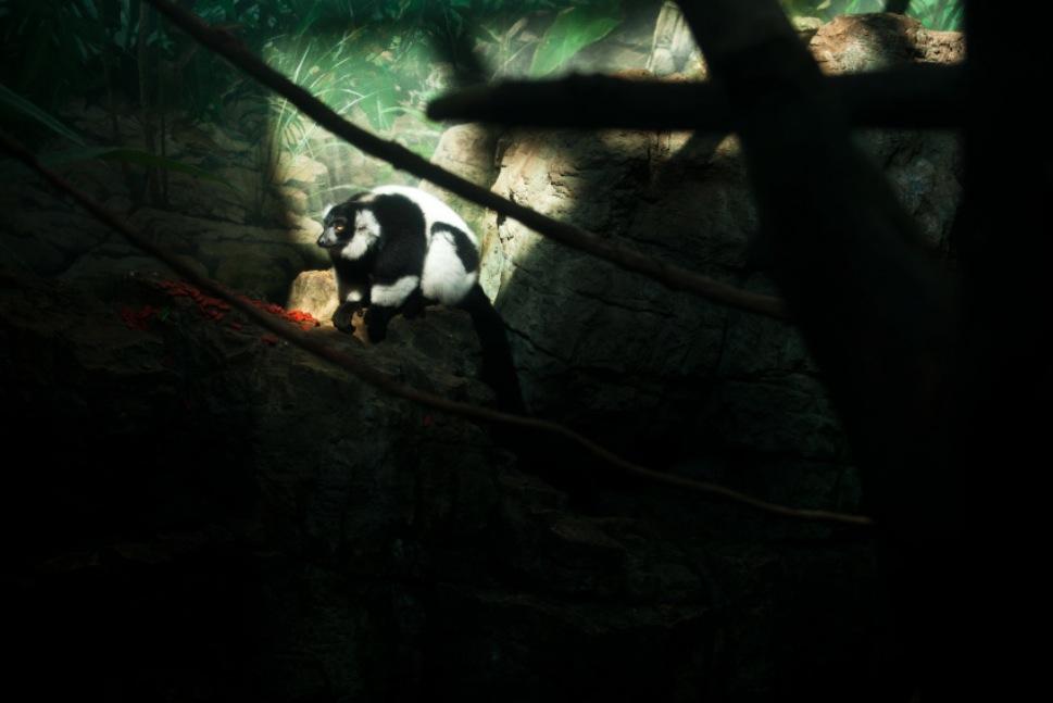 captive-14