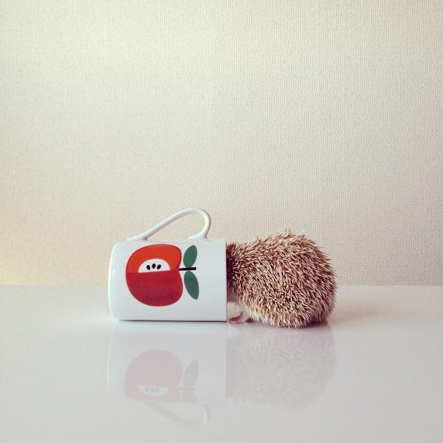 cutest-hedgehog-ever-10