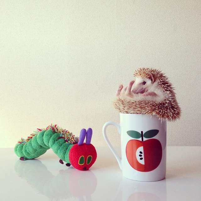 cutest-hedgehog-ever-11