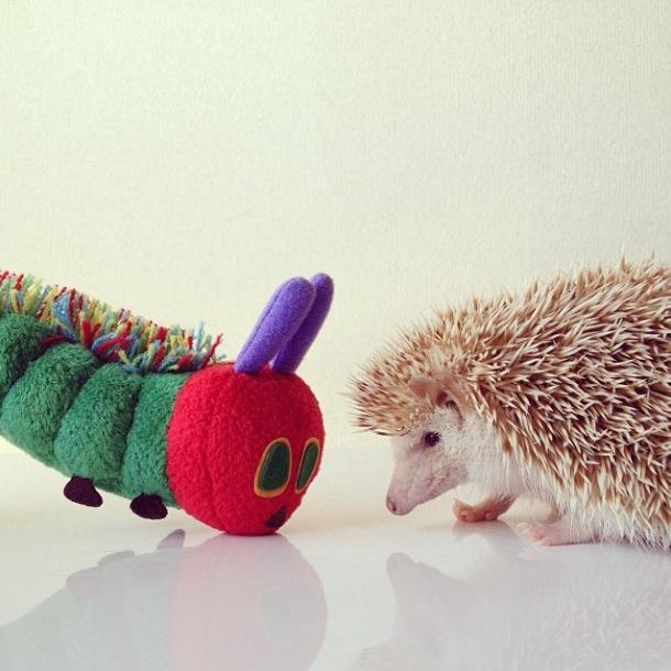 cutest-hedgehog-ever-20