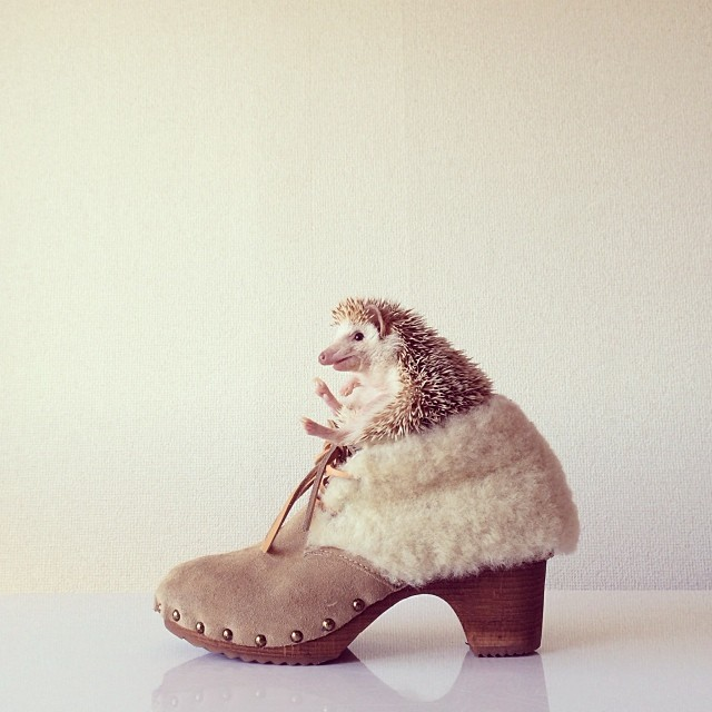 cutest-hedgehog-ever-3