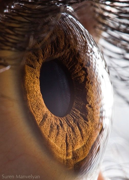 extremely-detailed-close-ups-eye-1