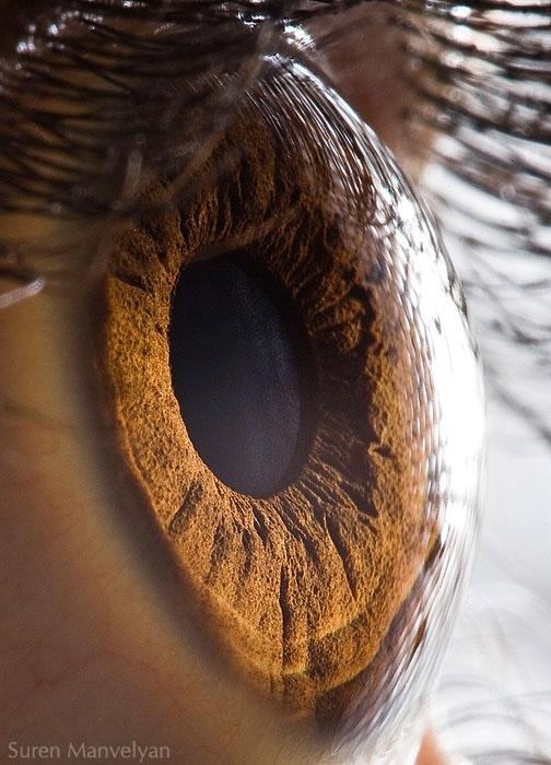 extremely-detailed-close-ups-eye-1