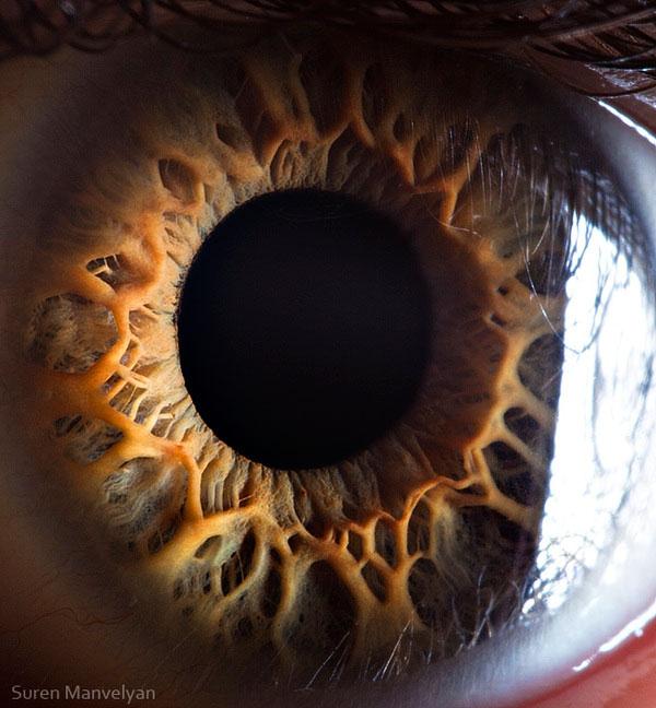 extremely-detailed-close-ups-eye-10