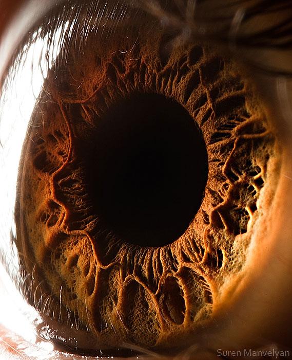 extremely-detailed-close-ups-eye-12