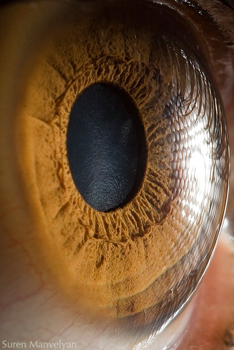 extremely-detailed-close-ups-eye-2