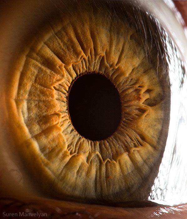 extremely-detailed-close-ups-eye-6