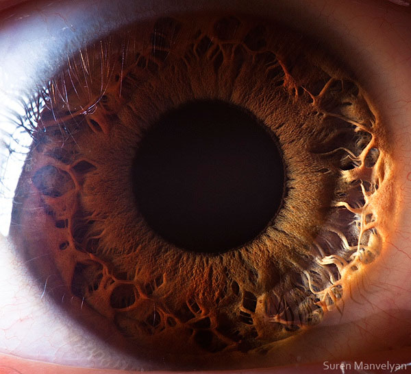extremely-detailed-close-ups-eye-8