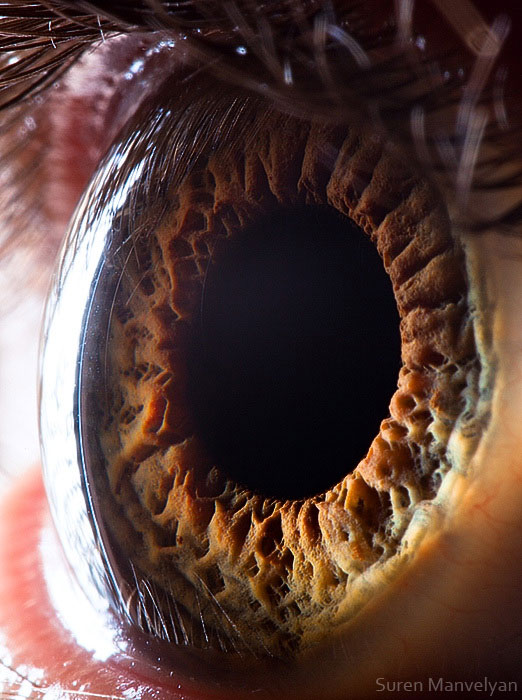 extremely-detailed-close-ups-eye-9