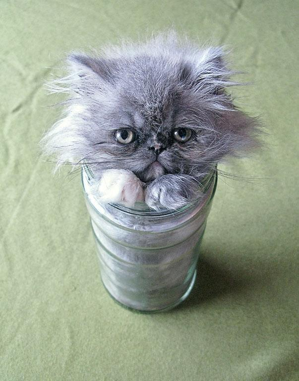 cats-are-liquid-8