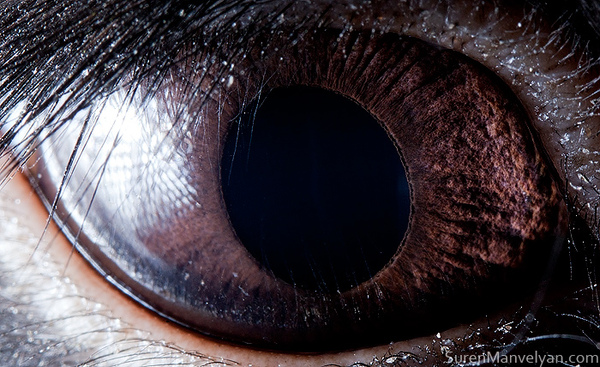 eyes-of-animals-close-ups-11