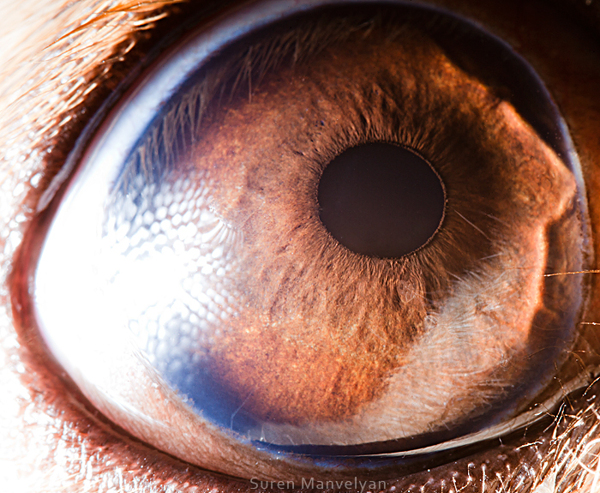 eyes-of-animals-close-ups-13
