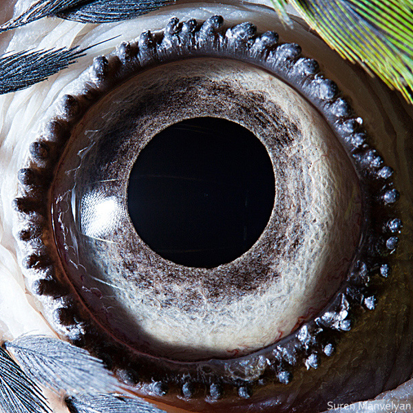 eyes-of-animals-close-ups-14b