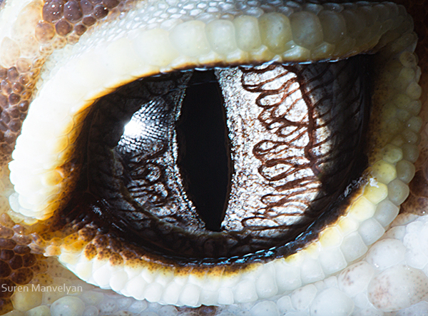 eyes-of-animals-close-ups-15