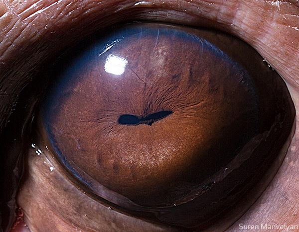 eyes-of-animals-close-ups-16