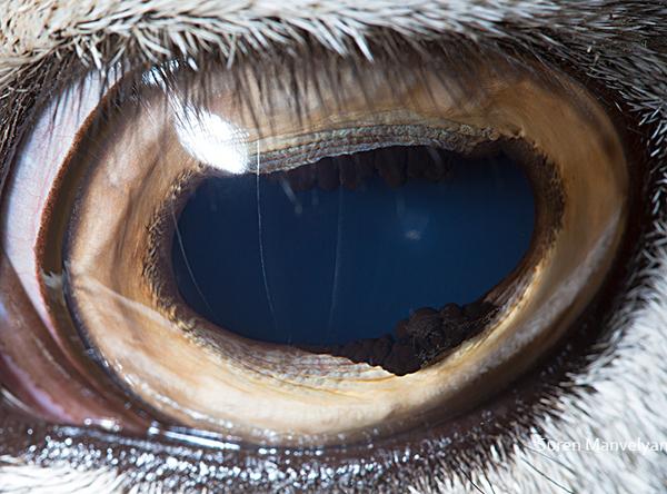 eyes-of-animals-close-ups-18