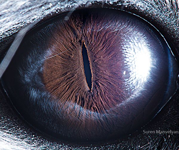 eyes-of-animals-close-ups-19