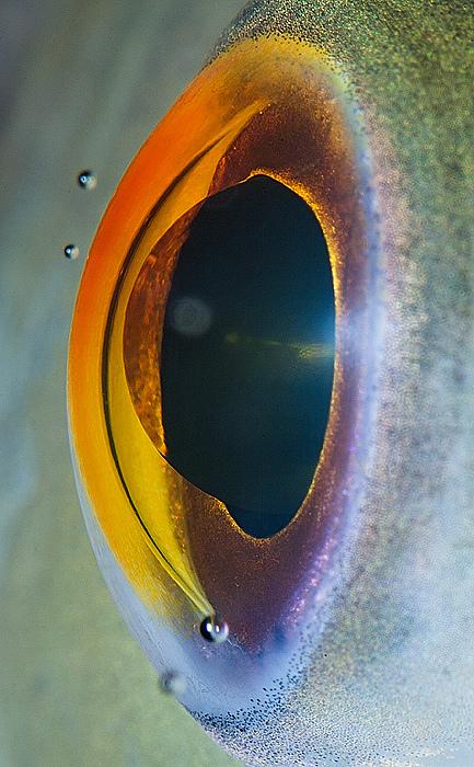 eyes-of-animals-close-ups-2
