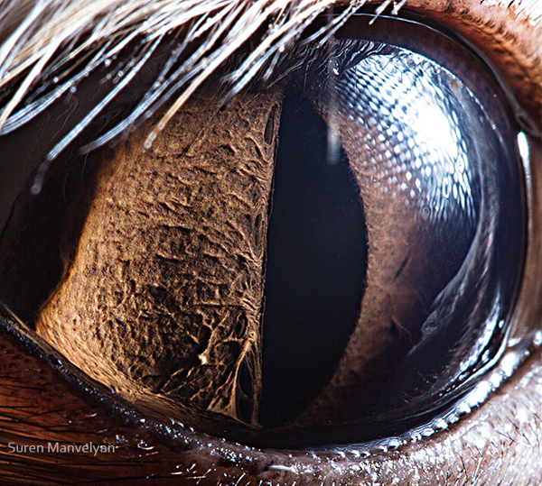 eyes-of-animals-close-ups-20