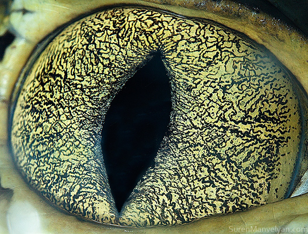 20 mind blowing animal eyes as you've never seen themAnimal Eye Close Up