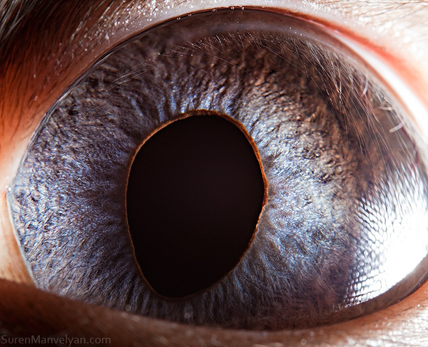 eyes-of-animals-close-ups-4