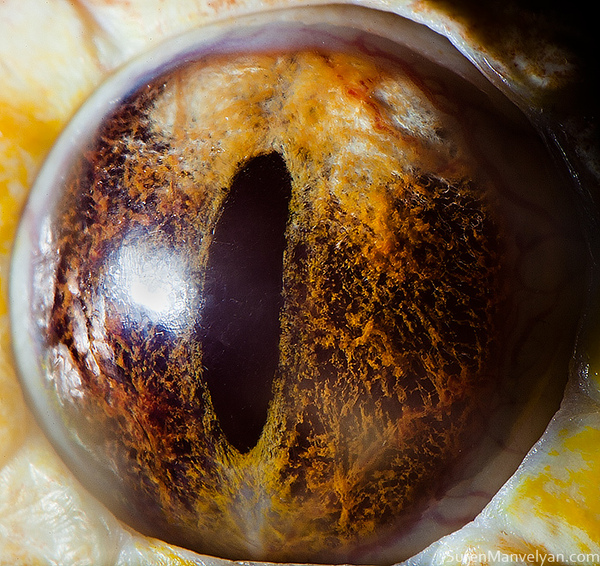 eyes-of-animals-close-ups-5