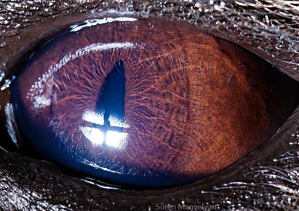 eyes-of-animals-close-ups-6