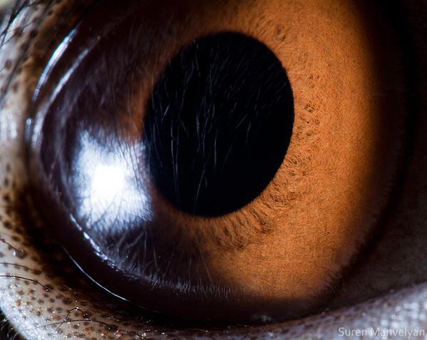 eyes-of-animals-close-ups-7