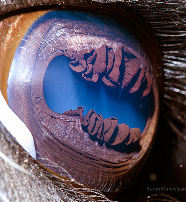 eyes-of-animals-close-ups-8