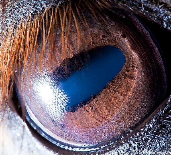 eyes-of-animals-close-ups-9