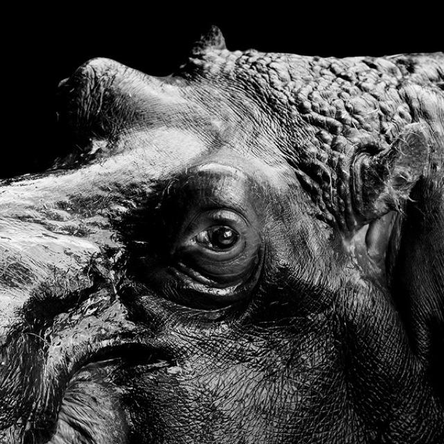 animal-portraits-1