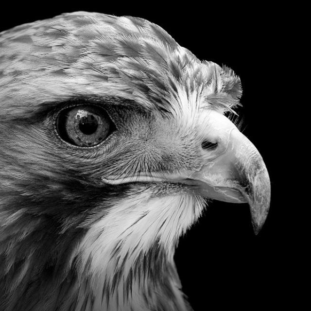 animal-portraits-2