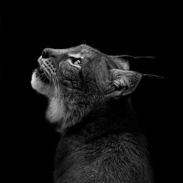 animal-portraits-7