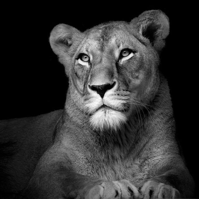 animal-portraits-8