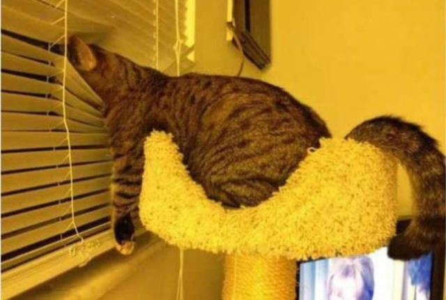 cats-sleeping-funny-positions-2