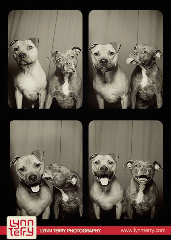 pit-bulls-photo-booth-1