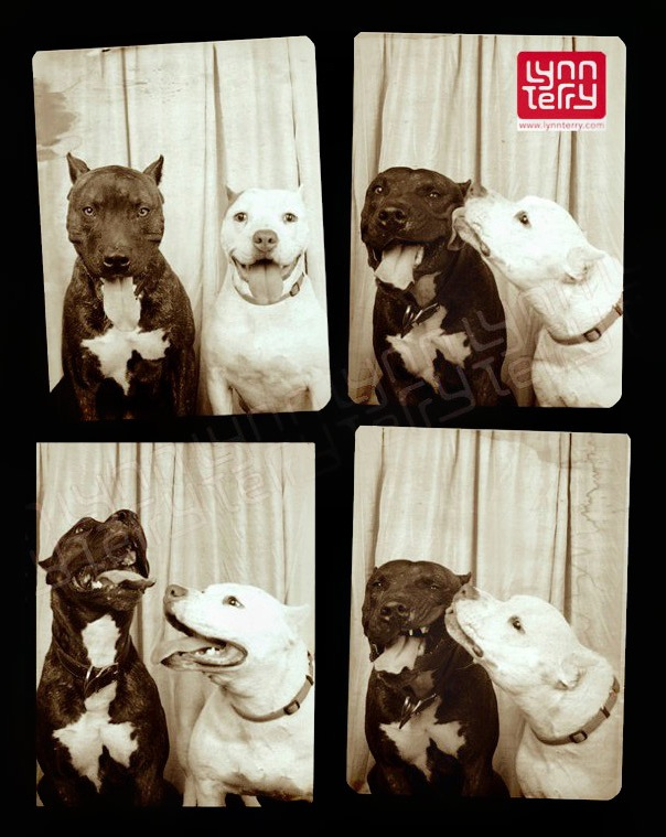 pit-bulls-photo-booth-2