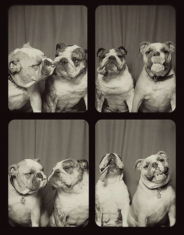 pit-bulls-photo-booth-3
