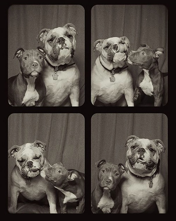 pit-bulls-photo-booth-4