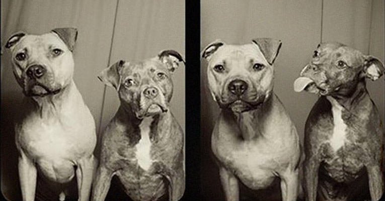 pit-bulls-photo-booth-ft