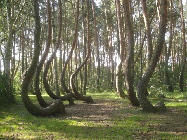 photo credits: Krzywy Las w Nowym Czarnowie