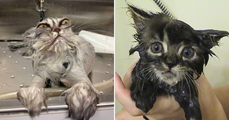 The Funniest Wet Cats Pictures Of All Time - 26 funniest wet cats pictures