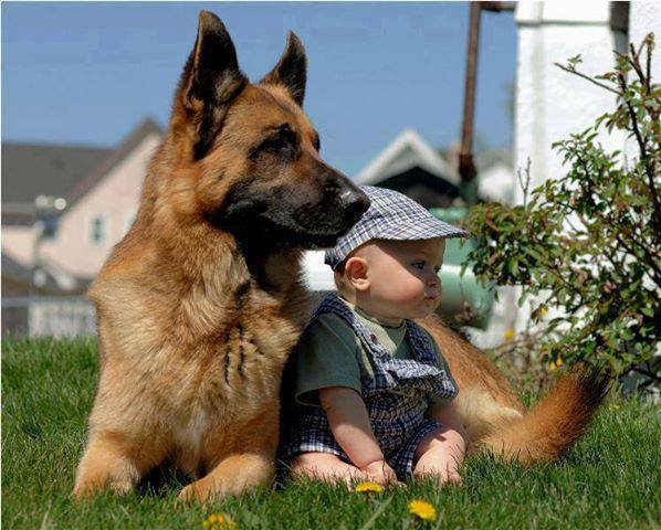 babies-need-pets-11