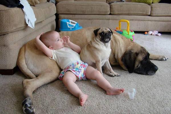 babies-need-pets-13