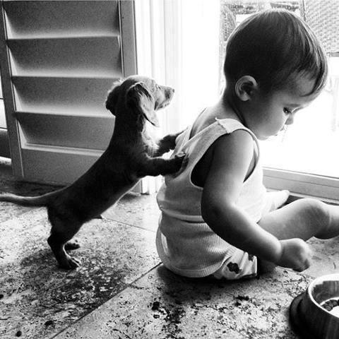 babies-need-pets-16